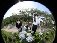더위 식혀주는 수국(水菊)